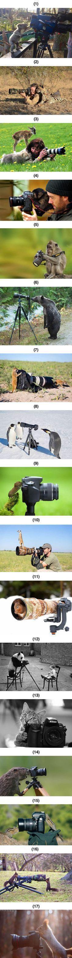 Tiere, die unbedingt Fotografen werden wollen Webfail