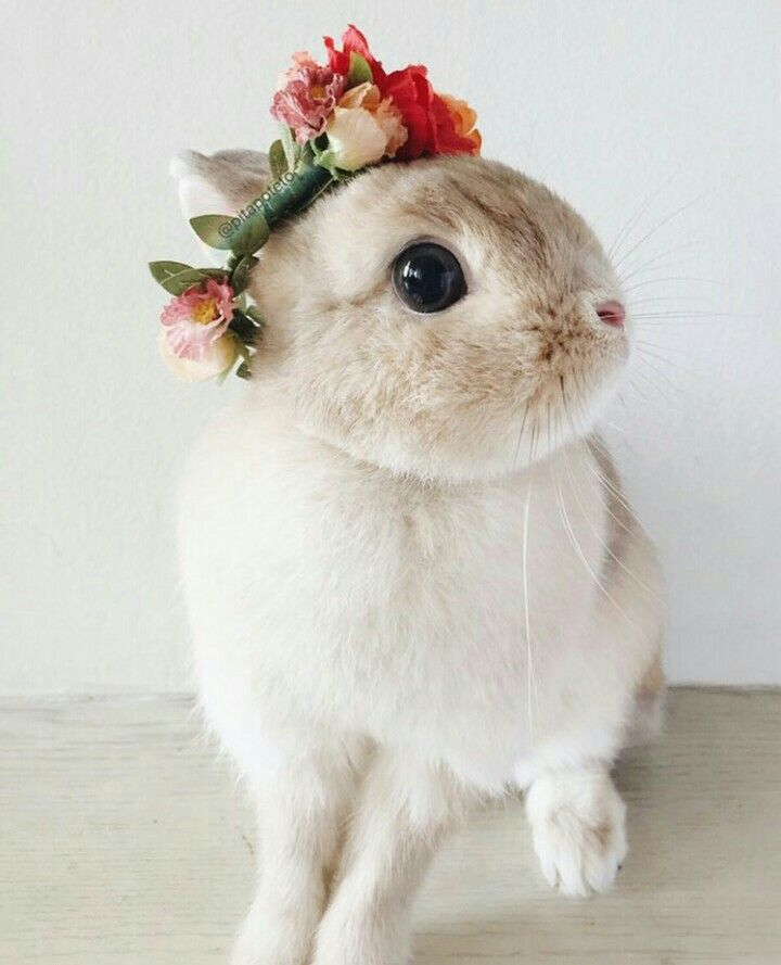 Pin By 3 On Animals Cute Animals Cute Baby Bunnies Cute Animal Memes