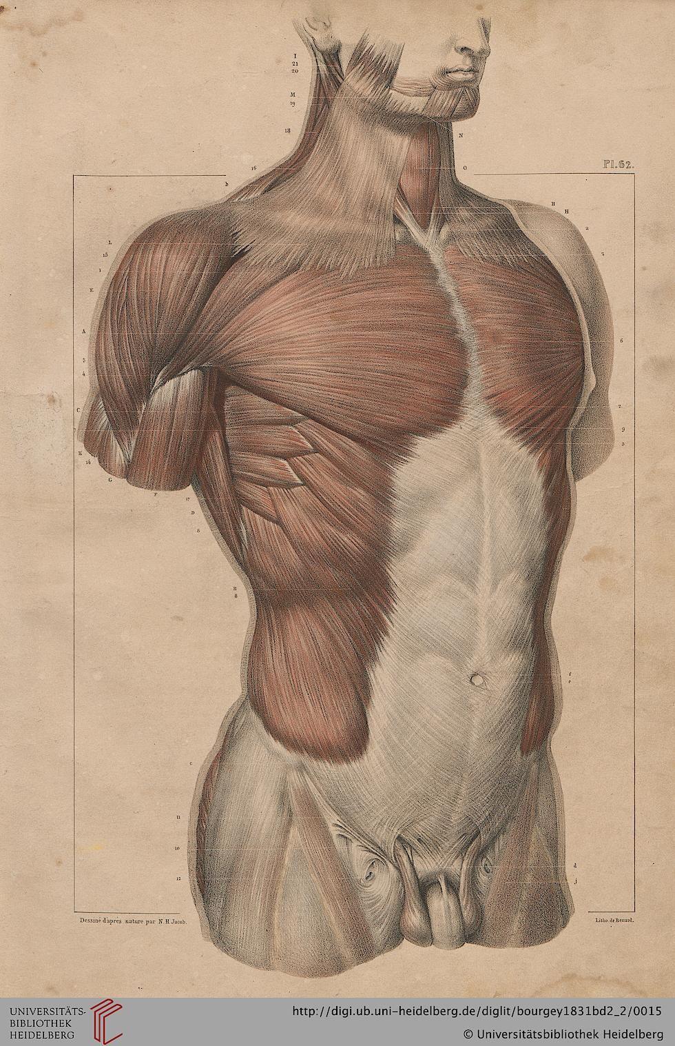 Traité complet de l\'anatomie de l\'homme comprenant la medecine ...