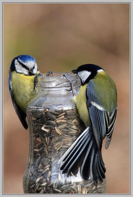Precious Sunflower Seeds In A Jar Pretty Birds Birds Pet Birds