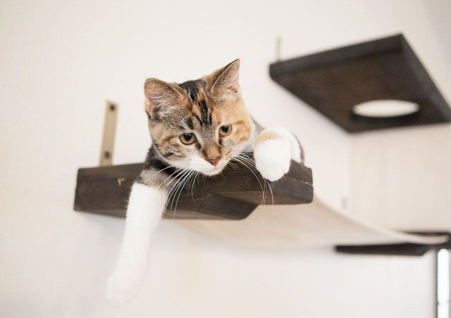 Cat Lounger Hammock w/ Escape Hatch by CatastrophiCreations on Etsy https://www.etsy.com/listing/197834387/cat-lounger-hammock-w-escape-hatch