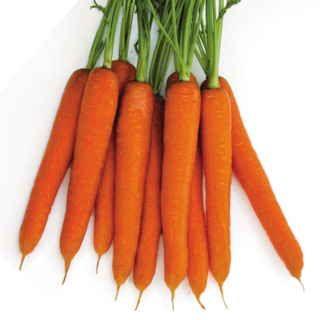 Tendersnax Hybrid Carrot Seed Tape