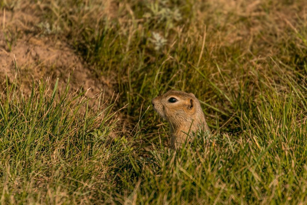 Canadian Wildlife Bucket List 16 Incredible Species