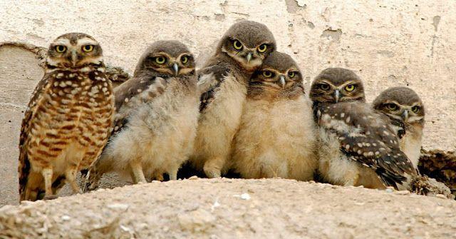 coisas miúdas e graúdas: Família com corujas, família de corujas, família coruja????