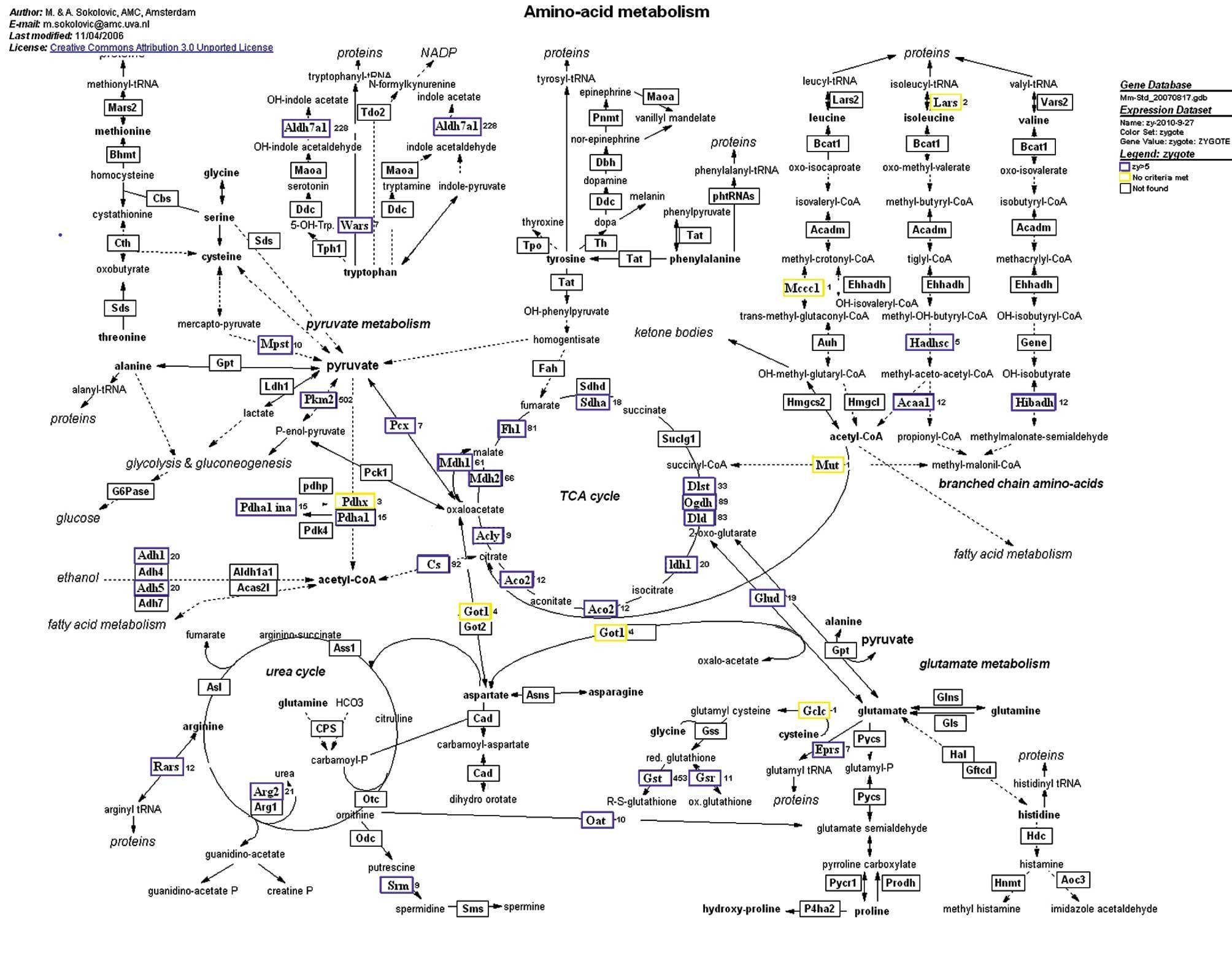 Amino Acid Therapy Chart  Google Search  Mind Matters