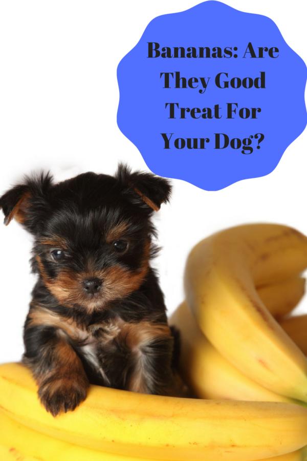 Bananas Healthy Dog Treat Can dogs eat bananas, Can