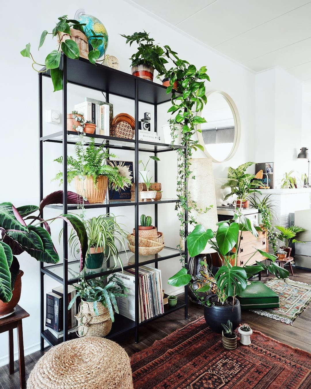 Plants Inside Rooms: How To Take Insta-Worthy Photos Of Your House Plants (With