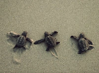 tortoiseeee <3<3<3
