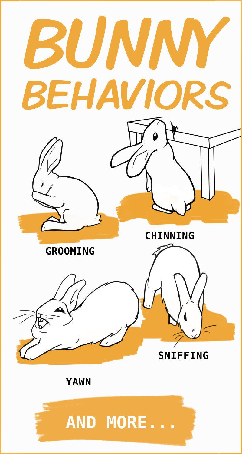 Rabbit Body Language An Illustrated Guide In 2020 Pet Bunny Rabbits Bunny Care Pet Rabbit Care