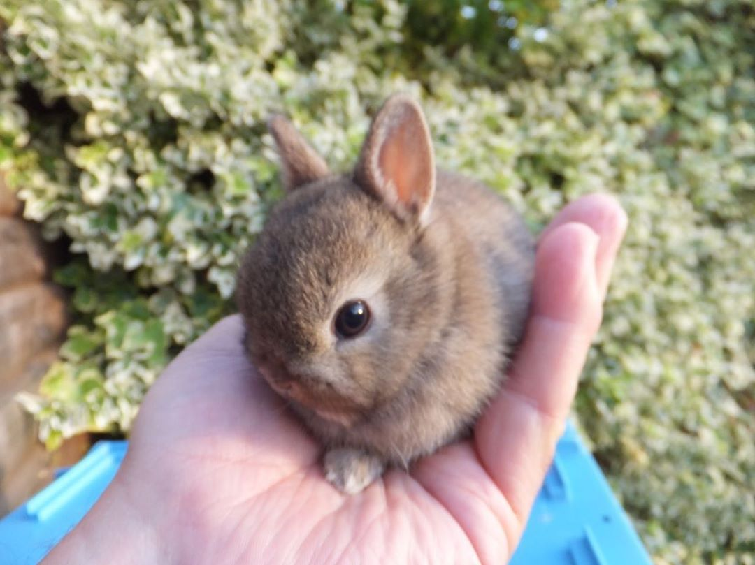 how to care for baby dwarf bunnies
