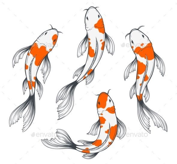 Set Of Four Traditional Japanese Koi Fishes Top View Simple Sketch Style Drawing Of Red And White Fishes Simplelandscap Koi Fish Drawing Fish Sketch Koi Art