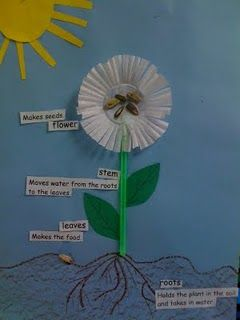 3D Flower Diagrams – Green straws make the stems & cupcake papers make the flower. Sunflower seeds are glued in the middle of the cupcake paper. Break apart one seed & put part of the shell down in the soil to represent where the plant sprouted from.