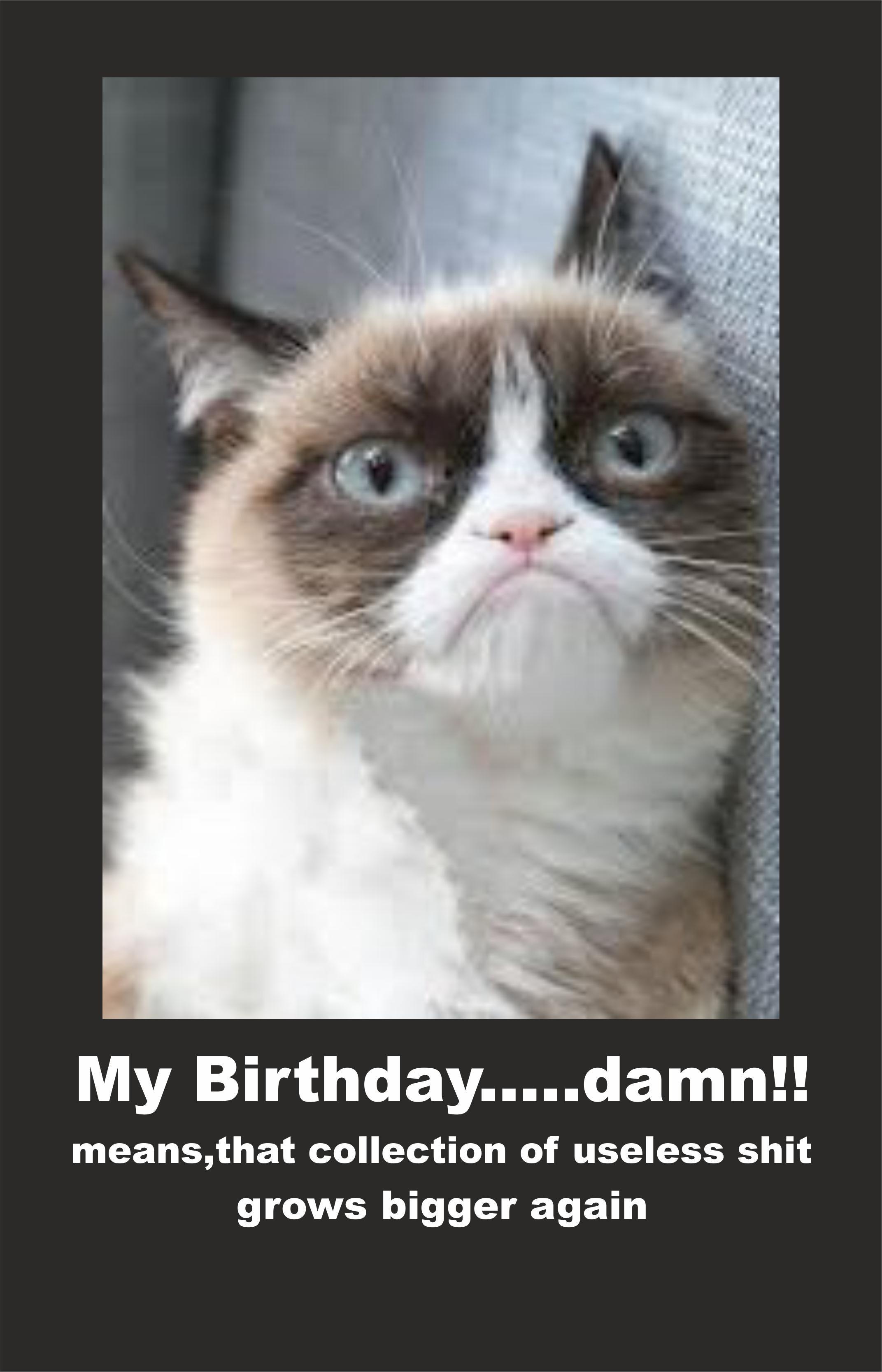 Birthday cat Grumpy