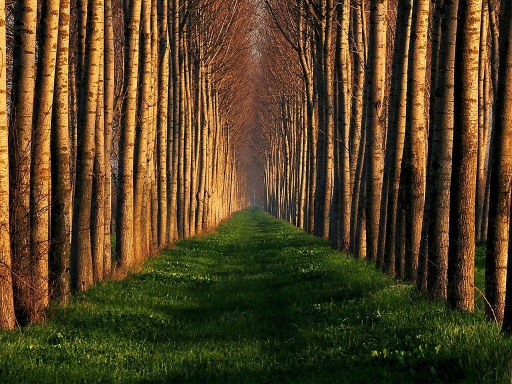 качестве основного картинка про деревьев вблизи интересно сравнить, что