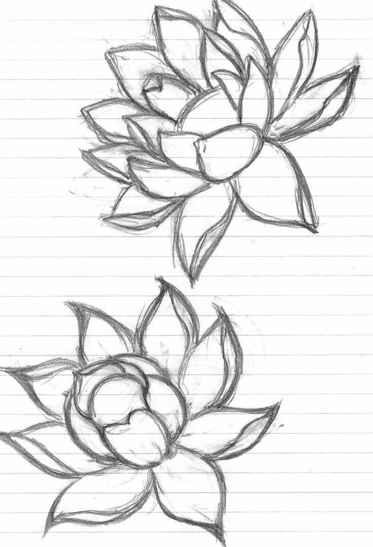 Lotus Flower Tattoo Discover Lotus Flower Drawing Sketch ...