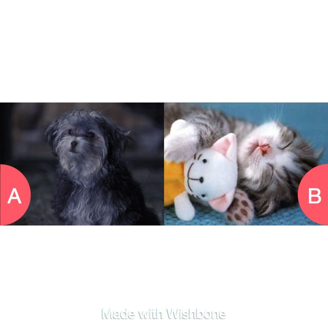 Would you prefer a dog or a cat . (The are my animals) Click here to vote @ http://getwishboneapp.com/share/21156127