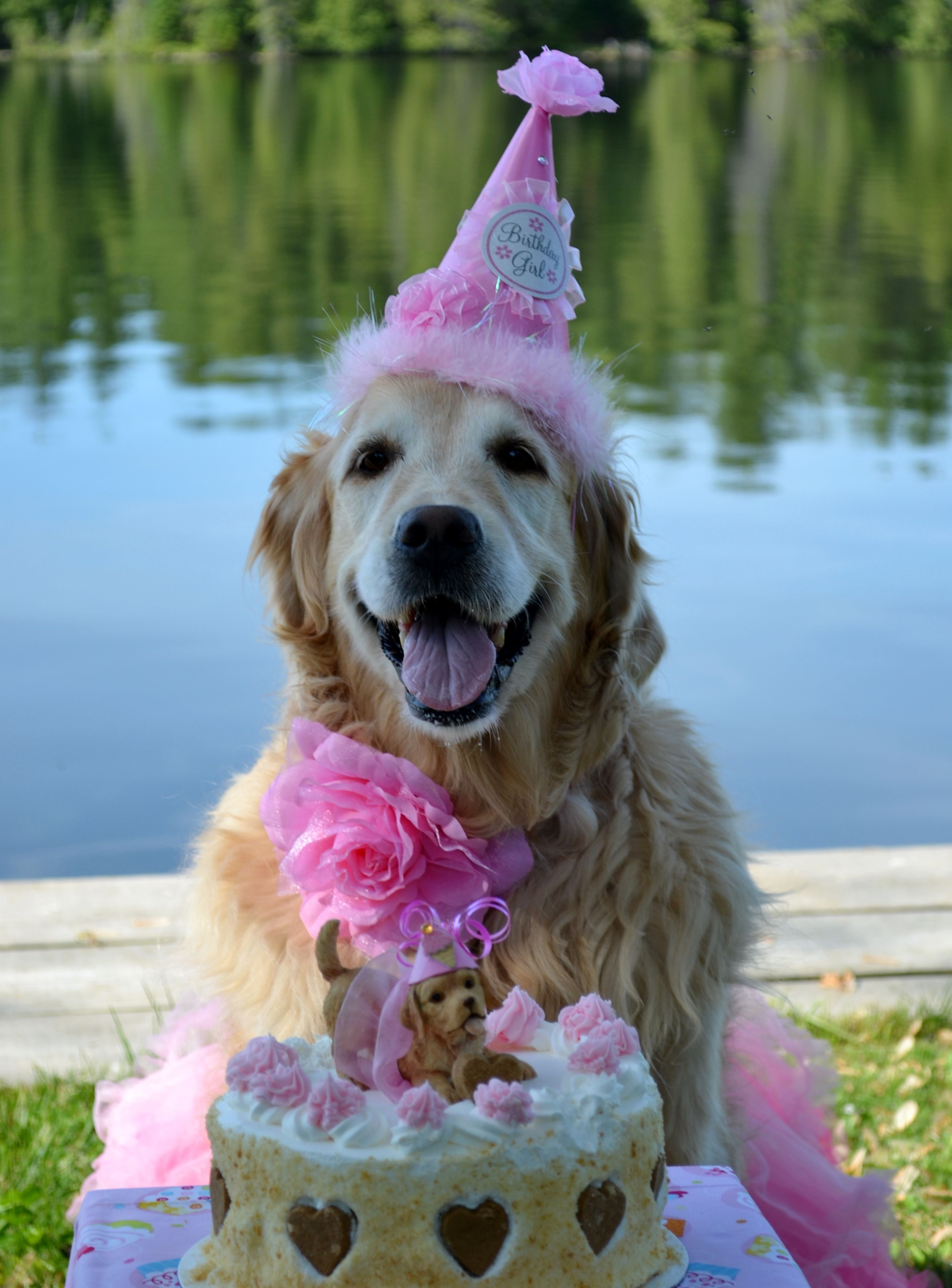Pleasant The Cake Even Has A Golden Retriever Topper Happy Birthday Funny Birthday Cards Online Alyptdamsfinfo