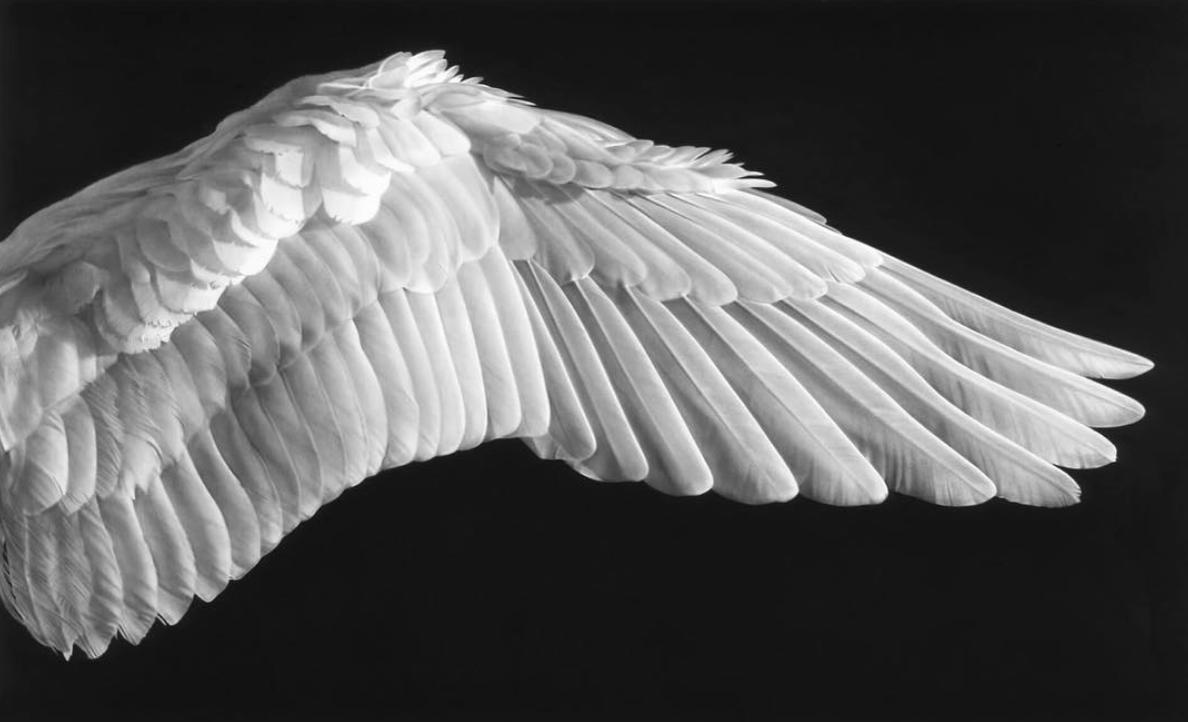 Изображением машины, картинки раскрытые крылья ангела