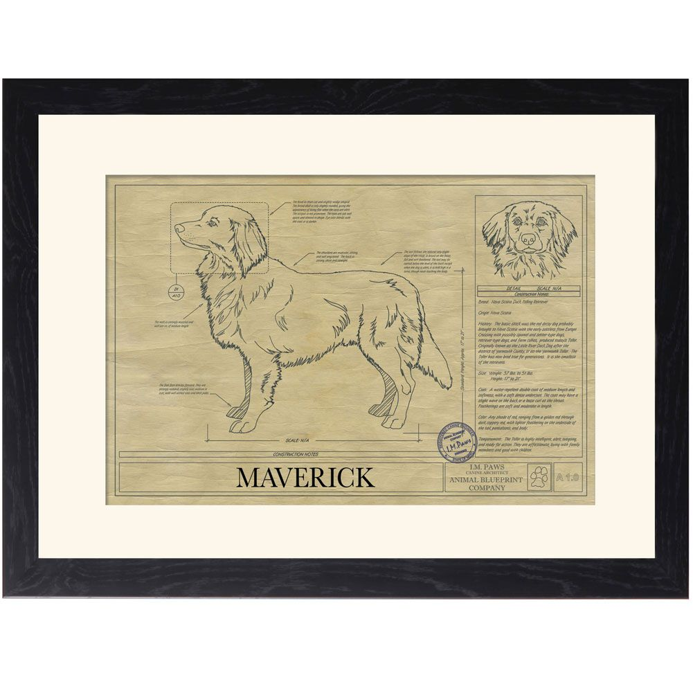 Personalized Framed Dog Breed Architectural Renderings -Nova Scotia Duck Tolling Retriever #architecturerendering