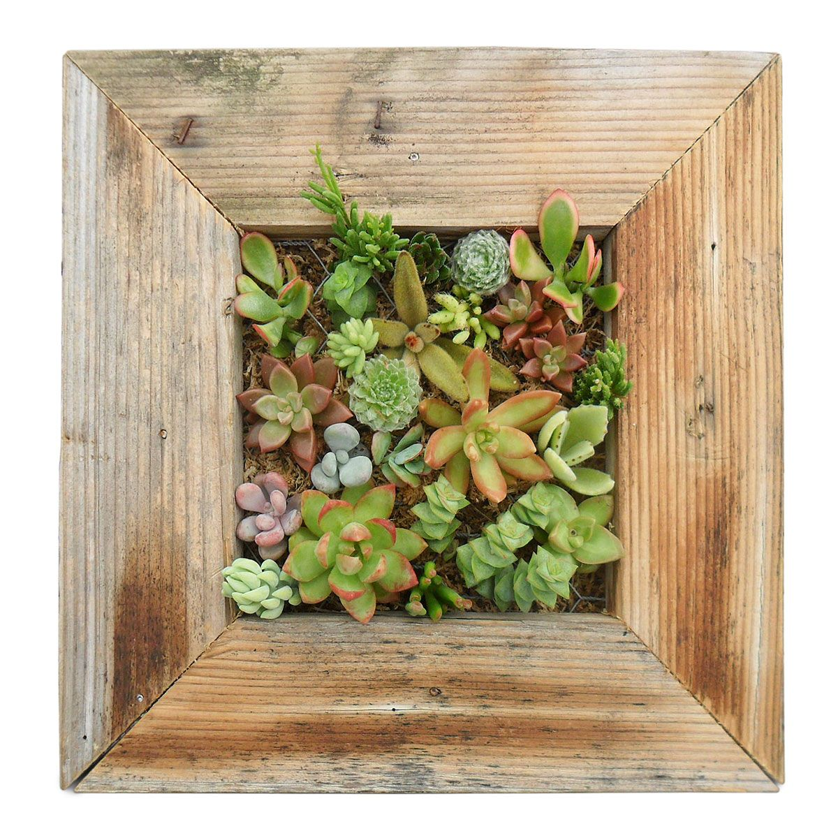 Americanmade Succulent Wall Planter Kit Made In San Go Ca What A Beautiful Decoration For Any The House My This Would Hang