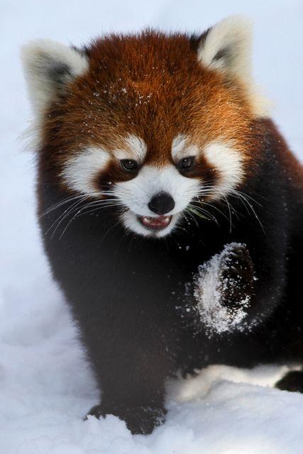 Playing in the snow | Flickr: Intercambio de fotos