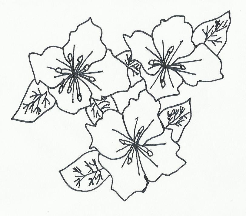 Dibujos De Flores A Lapiz Imagui Imagenes De Flores Para Dibujar
