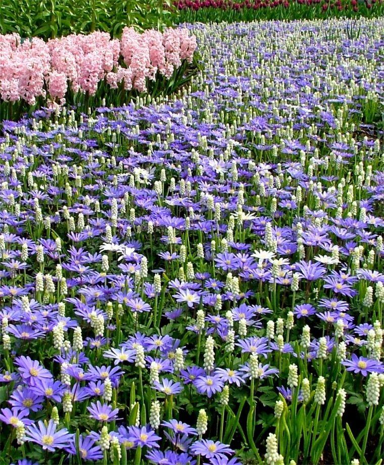 Anemone Blanda Blue Shades Anemone Blanda Flower Bulb Index Planting Tulips Bulb Flowers Plants