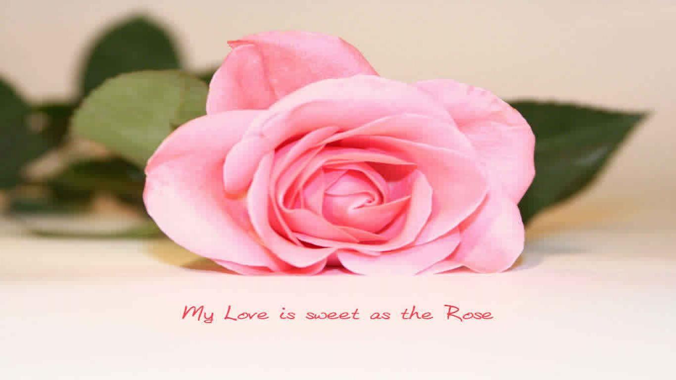 Pink Rose Love Quotes For Facebook Timeline Cover Rose Love Quotes Flower Quotes Love Wallpaper