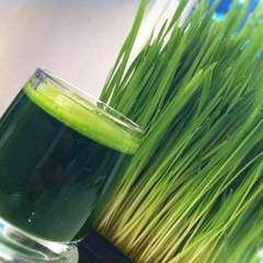 Fend off the flu by using wheatgrass with WOTV 4 Women's Healthy Eats Expert, @Margaux Drake.
