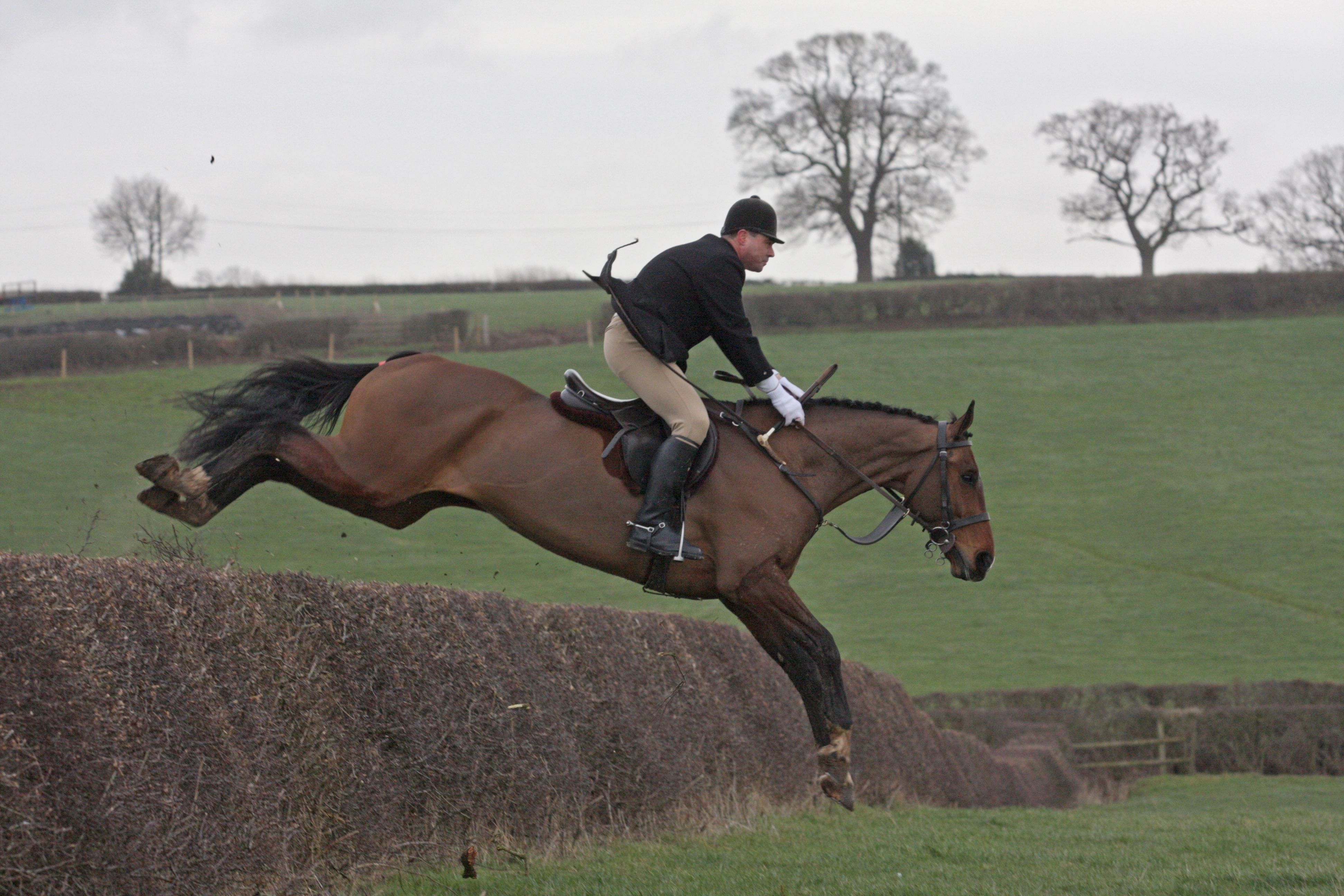 This 16.3hh nine-year-old bay #gelding could be the # ...