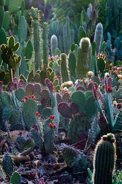 Arizona Cactus Garden, Stanford University, Palo Alto, CA.  Photo: pearson3, via Flickr