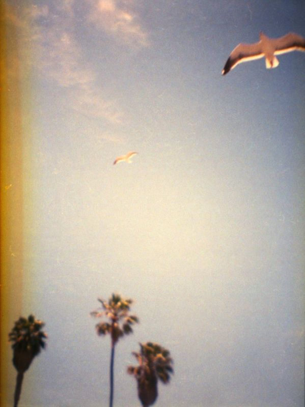 seagulls and palm trees. 35mm film, Diana Mini toy camera ...
