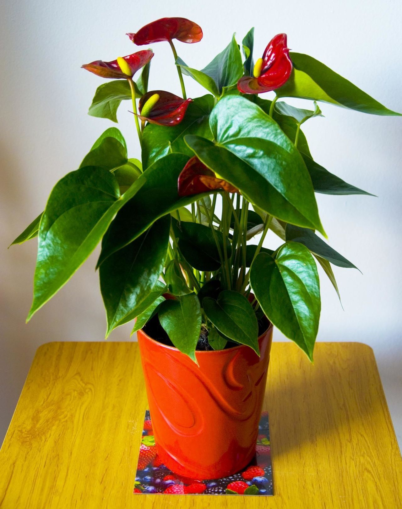10 Definitive Reasons You Need More Houseplants In Your Life Anthurium Plant Plants Growing Plants Indoors