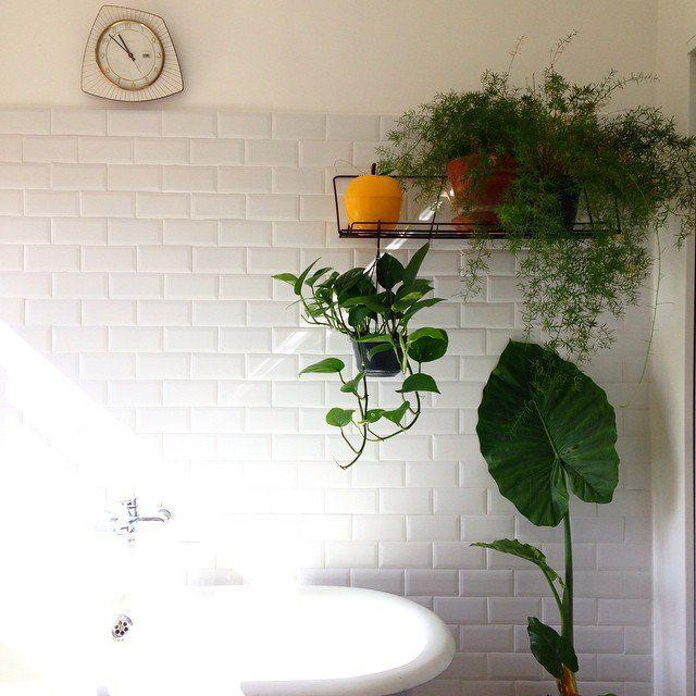 31+ Plante suspendue salle de bain ideas