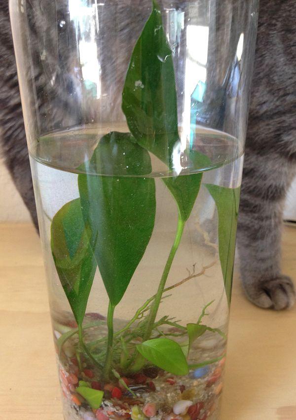 Easy Water Terrariums Bottled Water Plants Home Garden Patio