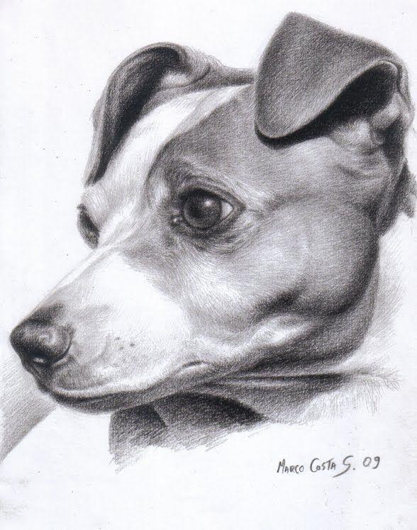 Marco Costa Artista Lápiz Perros Perros Dibujos A Lápiz Y Dibujos