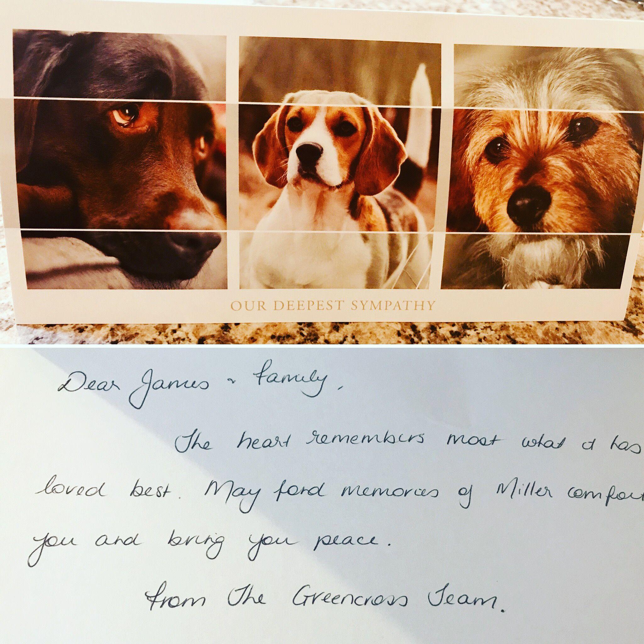 For our boy miller from our vet clinic vet clinics