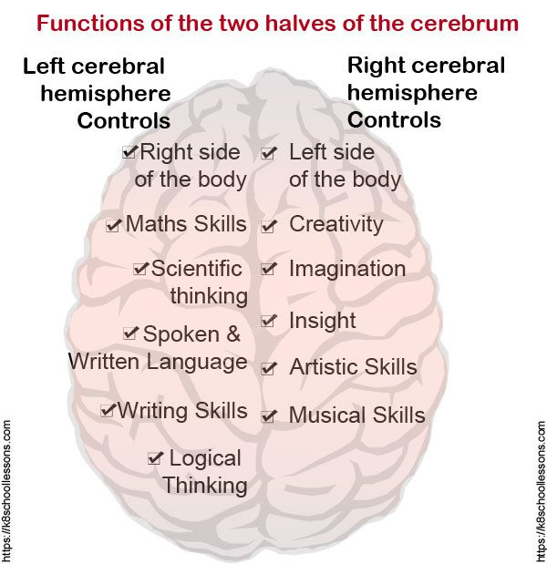 Science Facts Brain: Human Body Facts, Brain Facts, Interesting