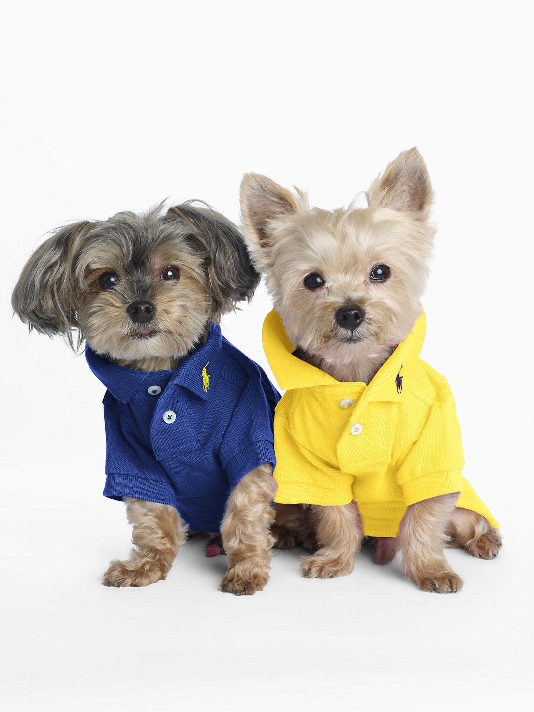 Classic Dog Polo For The Pet Home Ralphlauren Com Dog Sweaters Dog Coats Dog Clothes