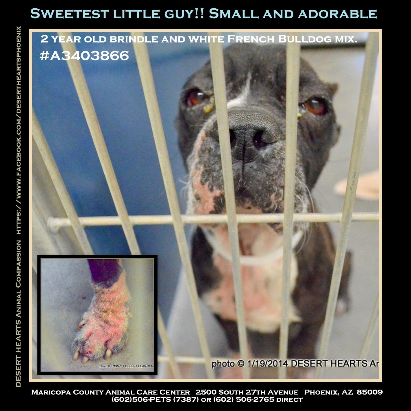 Featured Dog In Need Status Stray Hold Will Need Rescue And