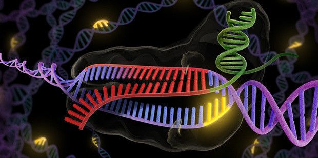 Cas9: one protein to rule them all  As we hail CRISPR/Cas as the most versatile, easy to design genome editing tool, as CRISPR in every form and color wins media attention, it is very easy to forget that the true workhorse in this system is an unimposing enzyme: Cas9.
