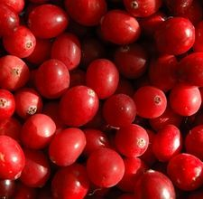 How to String Cranberries -