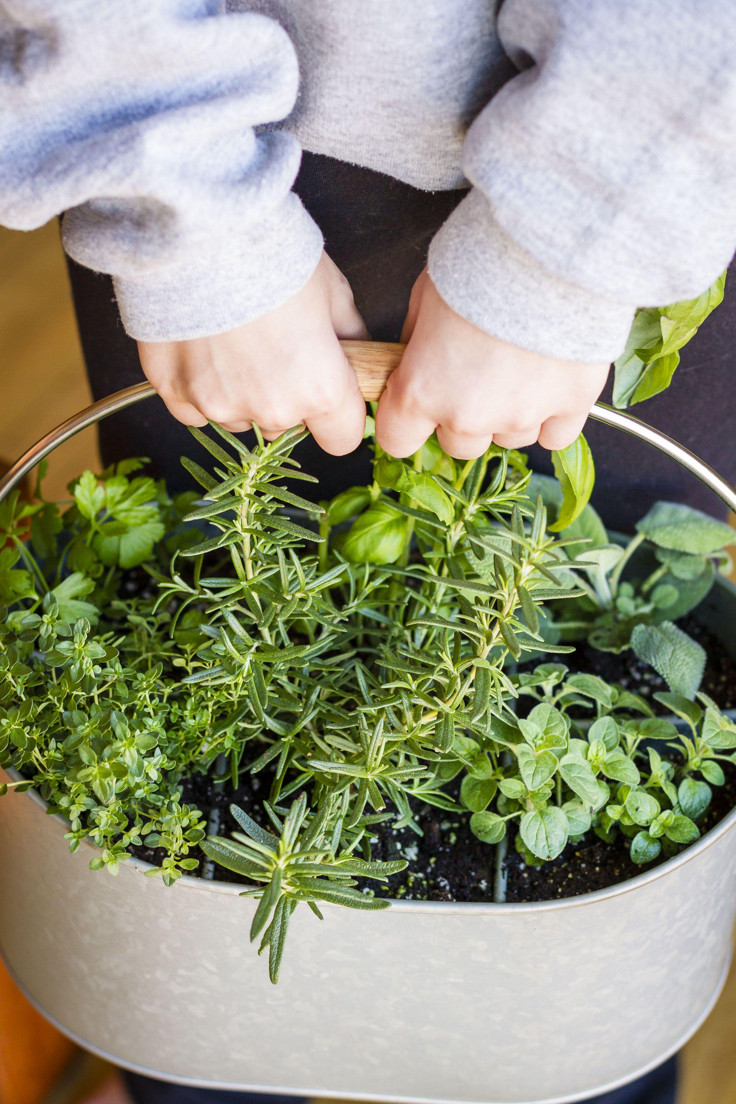 32 Ways To Create The Best Indoor Herb Garden Diy Herb 400 x 300