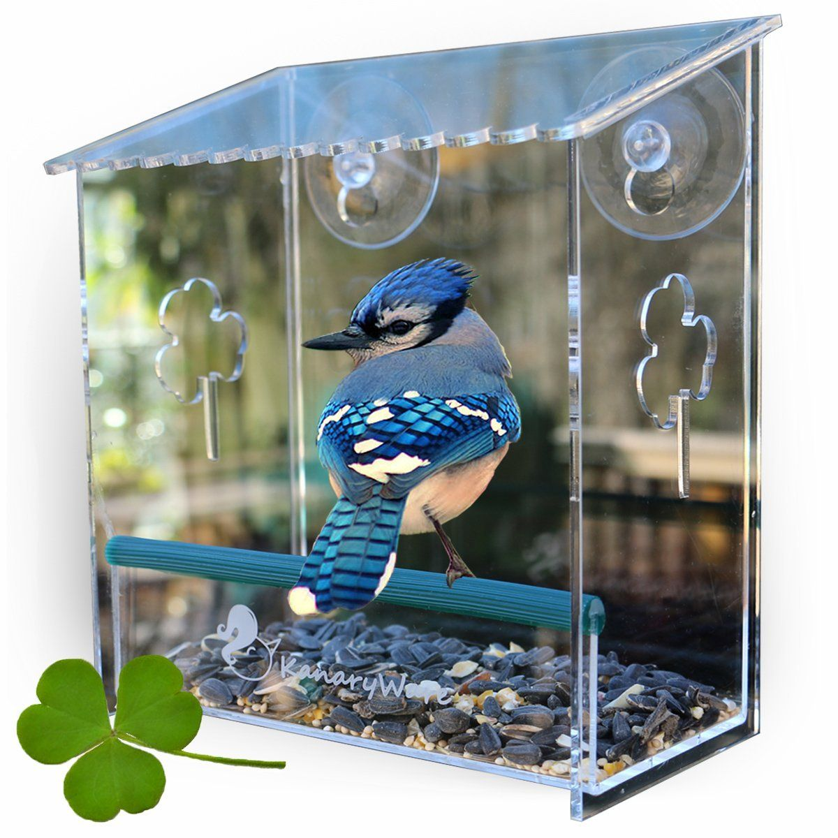 Window bird house - Amazon Com Window Bird Feeder Best For Small And Large Wild Birds Birdhouse