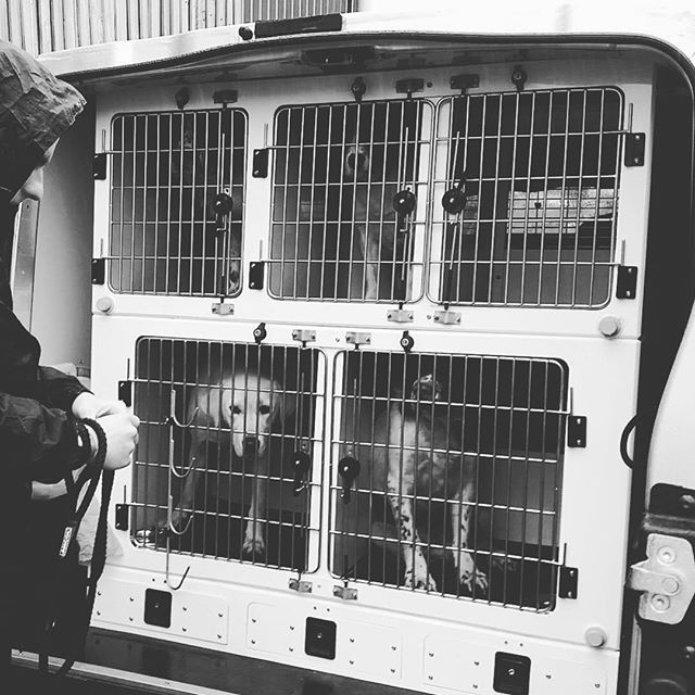 Custom Made Dog Van Conversion To Your Own Personal Requirements Dogvan Animaltransitboxes