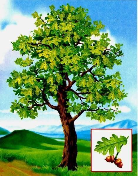 это картинки деревьев для начальных классов ней