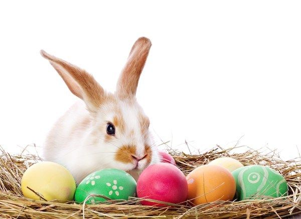 #happy #easter #wishes