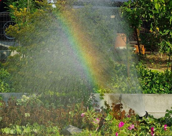 ホースから出る水で虹ができている