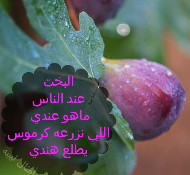 البخت عند الناس ماهو عندي اللي نزرعه كرموس يطلع هندي مثل ليبية Libya Quotes Fruit