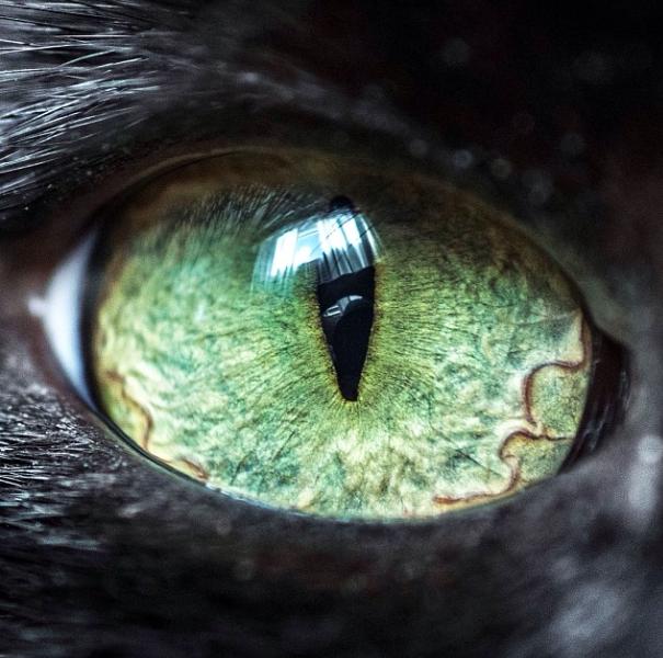 Cat Eyes Eye Photography Eye Art Eyes
